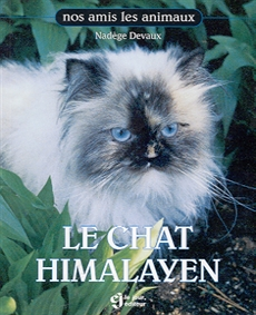 Le chat himalayen null messageries adp - Himalayen chat ...